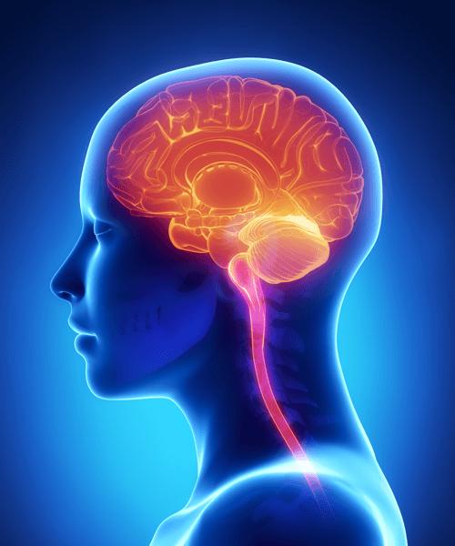 Human brain trauma